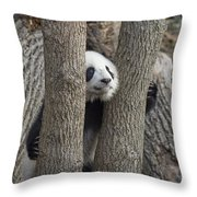 A Baby Panda Plays On A Branch Throw Pillow