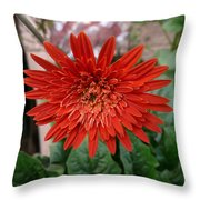 A Beautiful Red Flower Growing At Home Throw Pillow