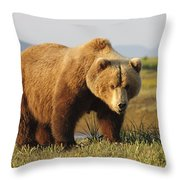 A Brown Grizzly Bear Ursus Arctos Throw Pillow