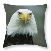A Close View Of An American Bald Eagle Throw Pillow