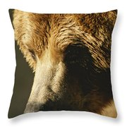 A Close View Of The Face Of A Grizzly Throw Pillow