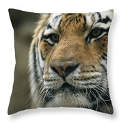 A Close View Of The Face Of Khuntami Throw Pillow