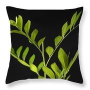 A Coffee Plant Coffea Arabica Throw Pillow