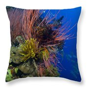 A Colony Of Red Whip Fan Corals Throw Pillow