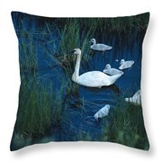 A Family Of Trumpeter Swans Swims Throw Pillow