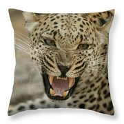 A Female Leopard, Panthera Pardus Throw Pillow