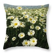 A Field Filled With Daisies In Bloom Throw Pillow
