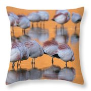A Flock Of Migratory Flamingos Roost Throw Pillow