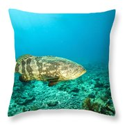 A Goliath Grouper Effortlessly Floats Throw Pillow