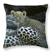 A Leopard  Cub, Panthera Pardus Throw Pillow