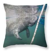 A Manatee Gets Dangerously Close Throw Pillow