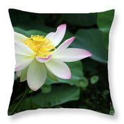 A Pink Tipped White Lotus Throw Pillow