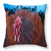 A Red Sea Fan With Sponge Colored Clam Throw Pillow