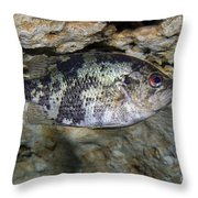 A Shadow Bass Hovers Motionless Throw Pillow
