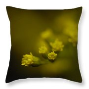 A Solidaster Solidaster Luteus Throw Pillow