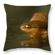 A Striped Newt Notophthalmus Throw Pillow
