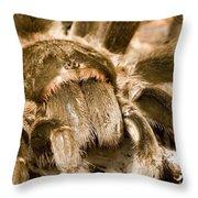 A Tarantula Living In Mangrove Forest Throw Pillow