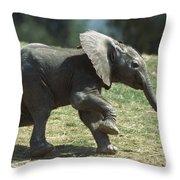 African Elephant Loxodonta Africana Throw Pillow
