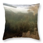 Algae In A Frozen Pond Throw Pillow