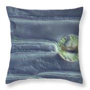 Amaryllis Leaf Epidermis Throw Pillow