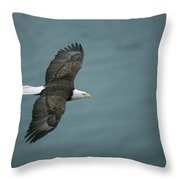 An American Bald Eagle, Haliaeetus Throw Pillow
