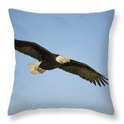 An American Bald Eagle In Flight Throw Pillow