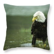 An American Bald Eagle Stares Intently Throw Pillow