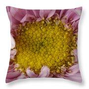 An Aster Flower Aster Ericoides Throw Pillow