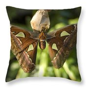 An Atlas Moth Atlas Attacus At The St Throw Pillow