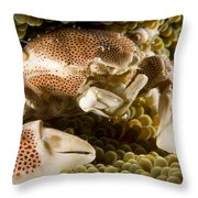 Anemone Or Porcelain Crab In Its Host Throw Pillow