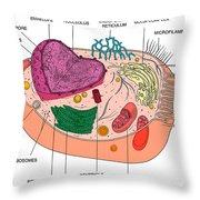 Animal Cell Diagram Throw Pillow