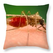 Anopheles Minimus, Malaria Vector Throw Pillow