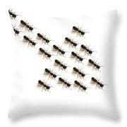 Ants, Forming An Arrow Throw Pillow