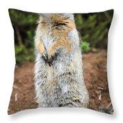 Arctic Ground Squirrel Throw Pillow