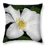 Artic White Throw Pillow