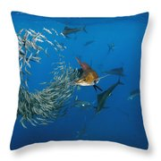 Atlantic Sailfish Istiophorus Albicans Throw Pillow
