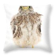 Baby Kestrel Throw Pillow