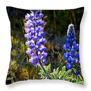 Back Lit Lupine Throw Pillow