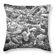Bacteria In Raw Sewage Sem Throw Pillow by Science Source