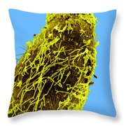 Bacteria On Sorghum Root Tip Throw Pillow