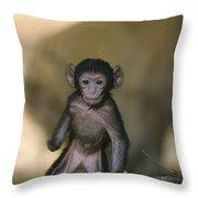 Barbary Macaque Macaca Sylvanus Infant Throw Pillow