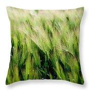 Barley, Co Down Throw Pillow
