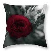 Red Rose Beauty Throw Pillow