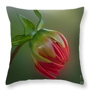 Before The Blossom Throw Pillow
