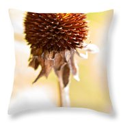 Black-eyed Susan After The Winter Throw Pillow