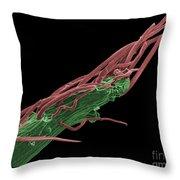 Black Locust Thorn, Sem Throw Pillow