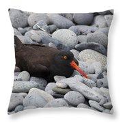 Black Oystercatcher Haematopus Bachmani Throw Pillow