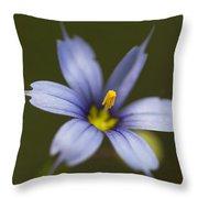 Blue-eyed Grass Wildflower - Sisyrinchium Angustifolium Throw Pillow