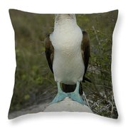 Blue-footed Booby Sula Nebouxii Throw Pillow