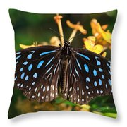Blue Glassy Tiger Butterfly Throw Pillow